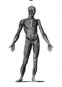 Motiv #003 - anatomie