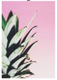 Motiv #164 - ananas-blaetter